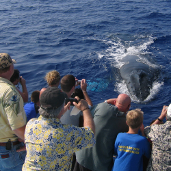 <p>Whale-watching cruises provide great photo ops. // © 2016 Ocean Sports</p><p>Feature image (above): Each winter, humpback whales are easy to spot...