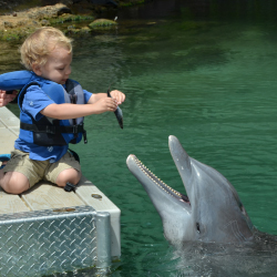 <p>Young visitors can feed dolphins at Dolphin Quest at The Kahala Hotel & Resort. // © 2016 Dolphin Quest</p><p>Feature image (above): Sea Life...