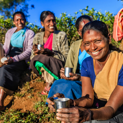 <p>Travelers can visit a Ceylon tea plantation and factory. // © 2016 iStock</p><p>Feature image (above): See Sri Lanka with Intrepid Travel. // ©...