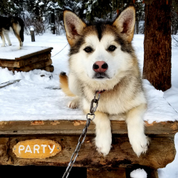 <p>Denali National Park's sled dog team spends the winter months patrolling the park. // © 2017 Erin Kirkland</p><p>Feature image (above): Kids can...