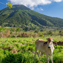 <p>Ometepe Island in Nicaragua has twin volcanoes named Maderas and Concepcion. // © 2017 iStock</p><p>Feature image (above): Granada Cathedral // ©...