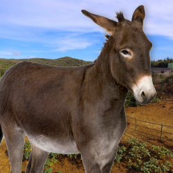 <p>See the stables and visitors center at the new donkey sanctuary in Santa Cruz. // © 2017 Donkey Sanctuary Aruba; Getty Images</p><p>Feature image...