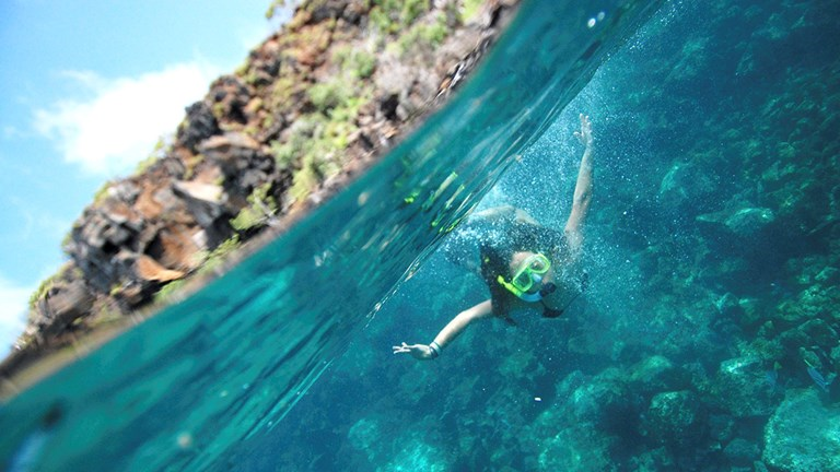 On the Adventures by Disney Galapagos Islands Expedition Cruise, guests will have the chance to snorkel.