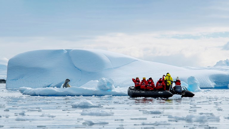 During the Adventures by Disney Antarctica and Patagonia Expedition Cruise, guests will embark on daily excursions where they can catch a glimpse of native wildlife in their natural habitat.