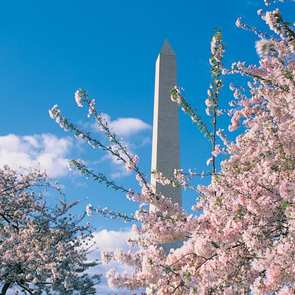 7 Things to Do With Kids in Washington, D.C., During COVID-19