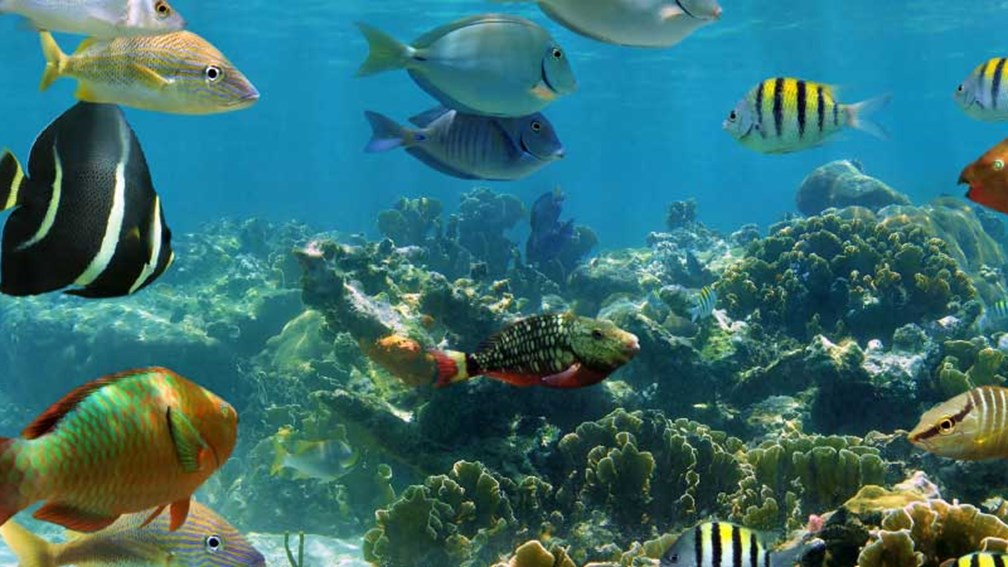 Cozumel, Mexico, has amazing sea life. // © 2013 Thinkstock 2