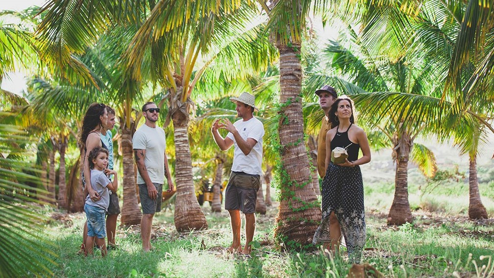 Learn All About Coconuts at Punakea Palms on Maui