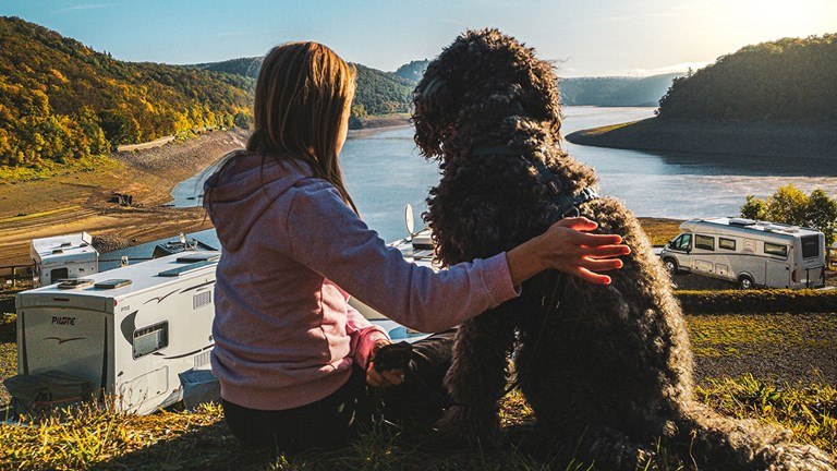 Many RV operators are pet-friendly.