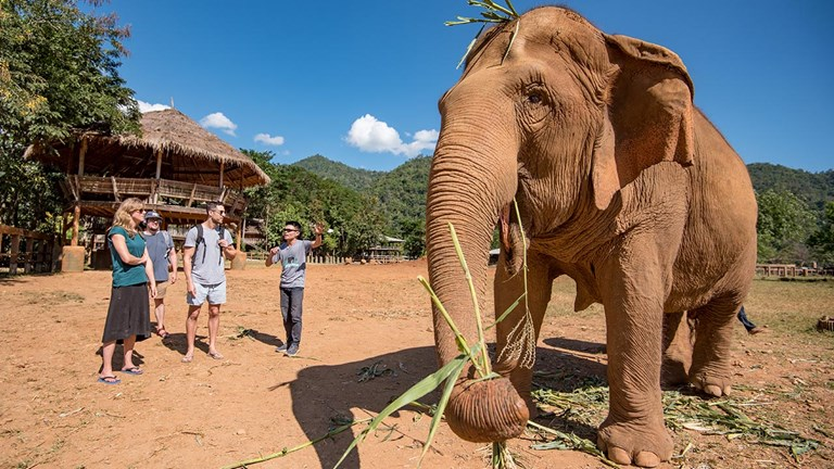 Intrepid Travel has researched the most ethical options for seeing elephants.