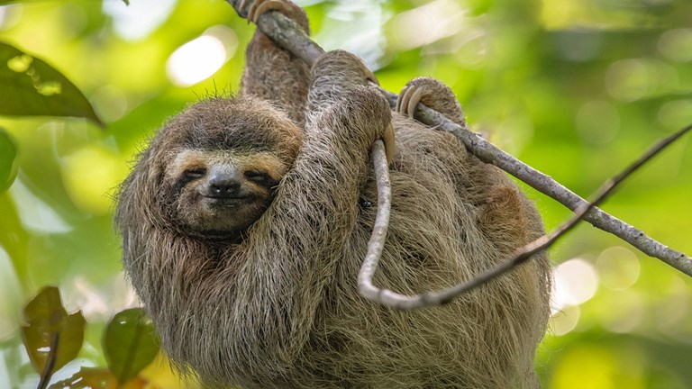 Costa Rica has limited tourists' contact with wildlife, such as sloths.