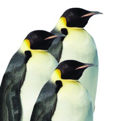 "Antarctica - Empire of the Penguin will feature the latest in theme park technology. // © 2013 Thinkstock"" title=""Antarctica - Empire of the Penguin..."