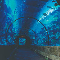 <p>Visitors to Mandalay Bay Resort and Casino's Shark Reef Aquarium can walk through a tunnel inside the 1.3-million-gallon shipwreck tank. // © 2016...