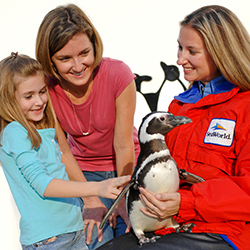 <p>Guests have the unique opportunity to interact with a penguin on SeaWorld Orlando's Behind-The-Scenes Tour. // © 2017 SeaWorld</p><p>Featured image...