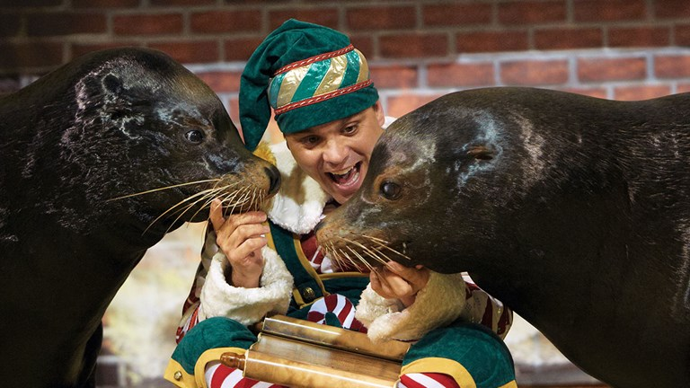 Sea lions Clyde and Seamore star in a family-friendly holiday show at SeaWorld.