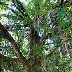 "<p>Tulane's ""bead tree"" is covered in colorful Mardi Gras beads year-round and is located near the university's Gibson Quad. // © 2015 Samantha..."