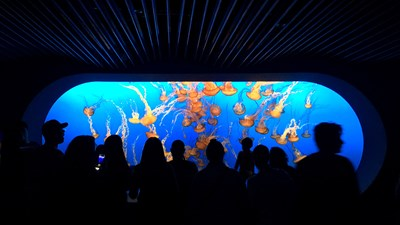 Been There, Do This: Monterey Bay Aquarium in Monterey, California